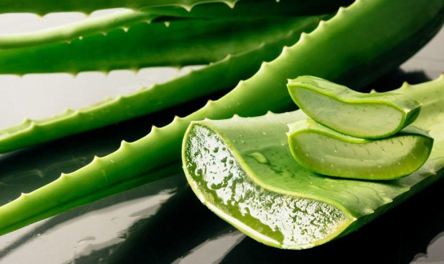 कोरफड ( Aloe Vera ) चे काही उपयोग काय आहेत ?